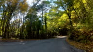scenic route through forest, GoPro video