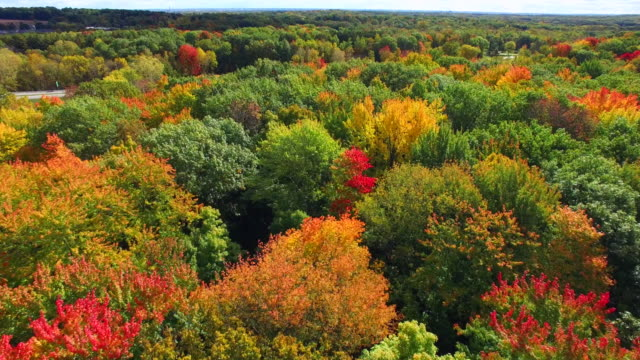 Scenic Rural Drive Amid Trees With Stunning Autumn Colors video