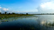 Scenic sunset in swamps video