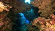 School of Big Eye Jacks in a Cavern at Belize video
