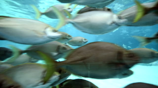 School of Marine Fishes video