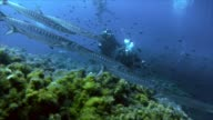 schooling barracudas and scuba divers in the mediterranean sea video