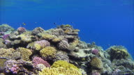 Schools of fishes on beautiful coral reef at Red Sea video