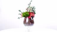 Science floristics, herbarium video