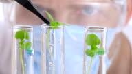 Scientist analyzing plants. Close-up shot. video