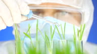 Scientist analyzing plants. video