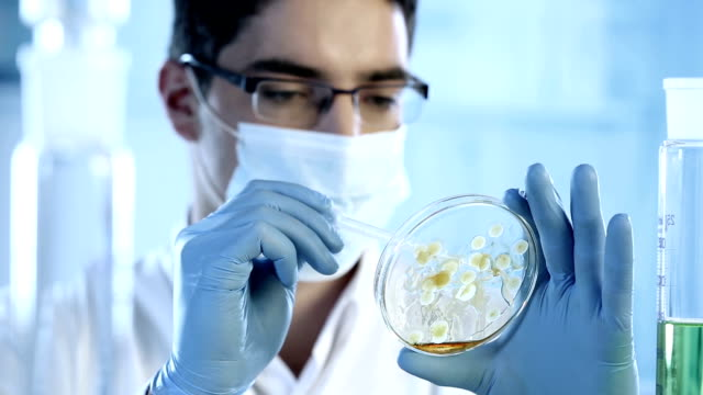 Scientist examines a petri dish with bacterial cultures video