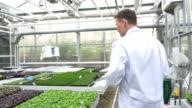 Scientist examining saplings in greenhouse video