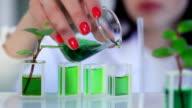 Scientist in the laboratory adding preparation to flasks video