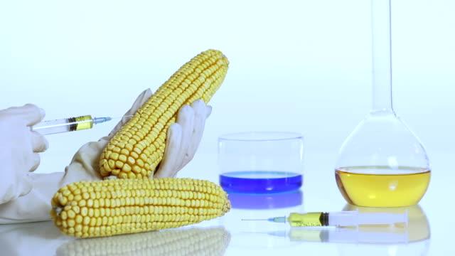 HD DOLLY: Scientist Modifying The Corn Genome video