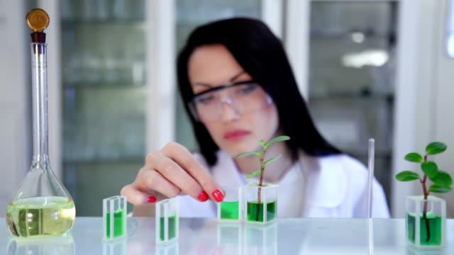 Scientist researches sprig in laboratory video