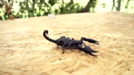 Scorpio video