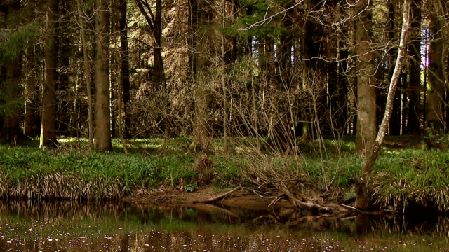 Scottish rural scene with a slow moving river and woodland video