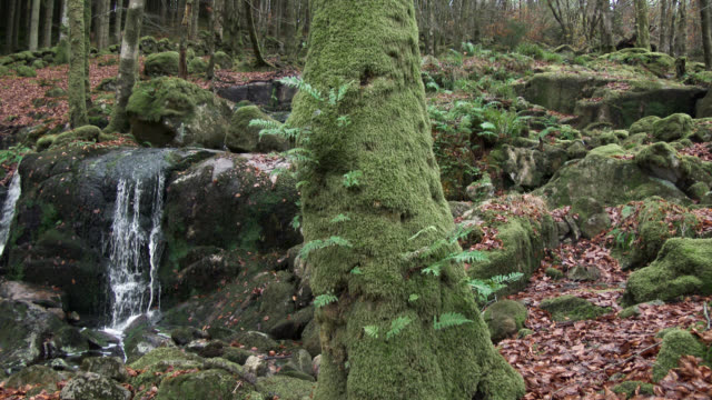Scottish woodland and small waterfall in late autumn video