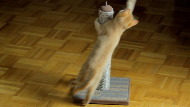 Scratching post video