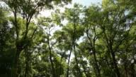 Scrub Oaks video