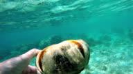scuba diver holding a starfish video