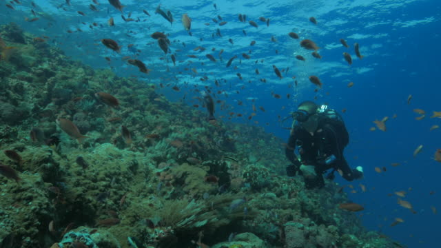 Scuba diver swimming at the coral reef undersea video
