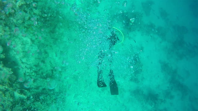 Scuba Diver, View from above video