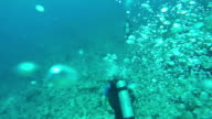 UNDERWATER: Scuba divers diving above stunning diverse rocky coral reef video