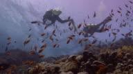 Scuba Divers video