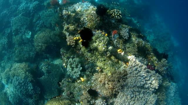 Scuba diving in tropical ocean video