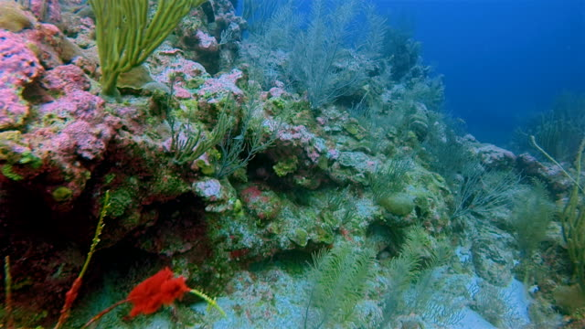 Scuba Diving on beautiful coral reef on Caribbean Sea - Belize Barrier Reef / Ambergris Caye video