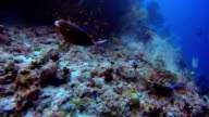 Scuba diving on coral reef on the Maldives video