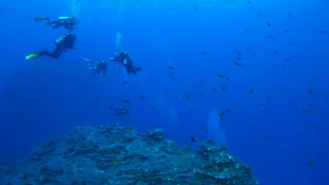 Scuba diving, undersea rock, Mexico video