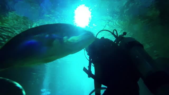 Scuba Diving video