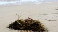 Sea and alga video