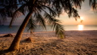 Sea and Coconut Palm video