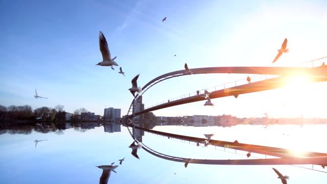 sea birds flying in slow motion. water bridge reflection background video