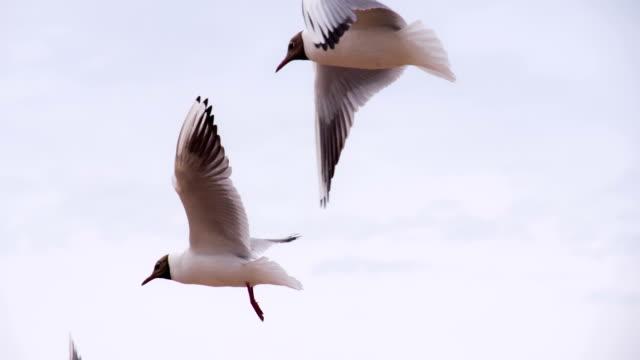 Sea Birds in the Cloudy Sky video