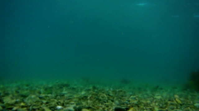Sea bottom under water. Waters of the Adriatic, Montenegro. Text video