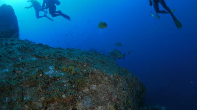 Sea bream fish in the reef video