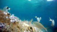 Sea fishes video