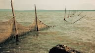 Mare pesca video