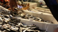 Sea Food Market, Anchovy Fish video