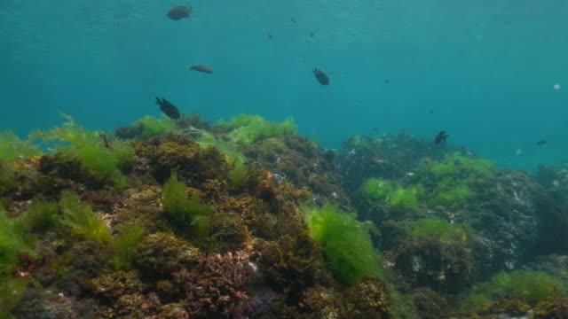 Sea grass growing on undersea rock, Taiwan (4K) video