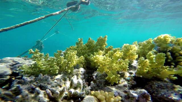 Sea Grass On Coral Reef, Static Scene, Red Sea video