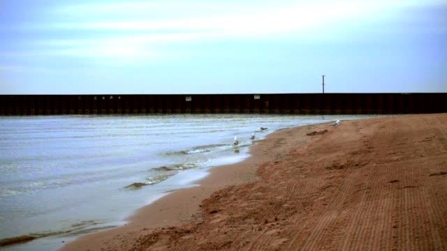 Sea gulls walking on beach. Seagulls sand. Sea beach with pier on horizon video