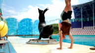 sea lion and trainer video