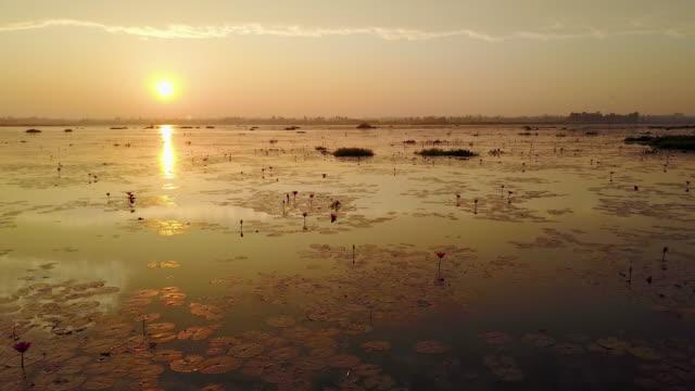 sea of red lotus lake, Thailand video