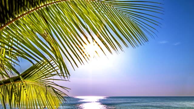 Sea, palm and sun video