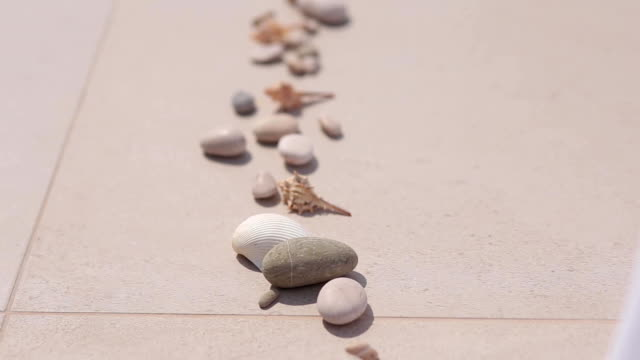 Sea pebbles and shells lined up in a row video