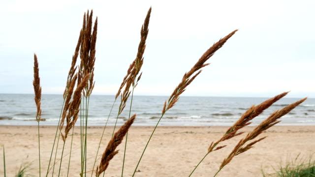 Sea plants wind nature video