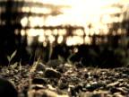 PAL: Sea Rocks video