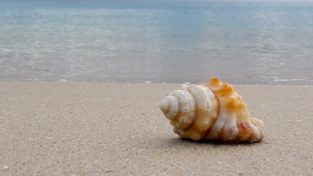 Sea shell on the beach video
