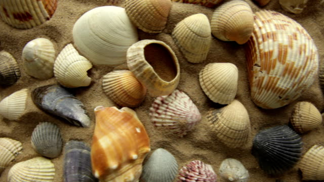 sea shells        NA BA video